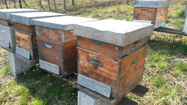 ruches de la ferme d'antan à crolles